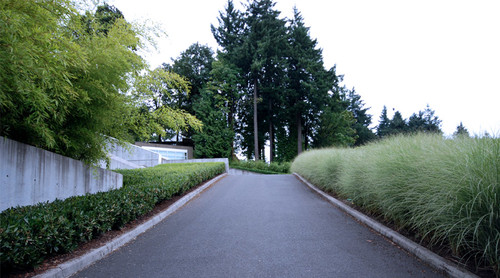 long asphalt driveway lined with tall grasses and low trimmed hedges
