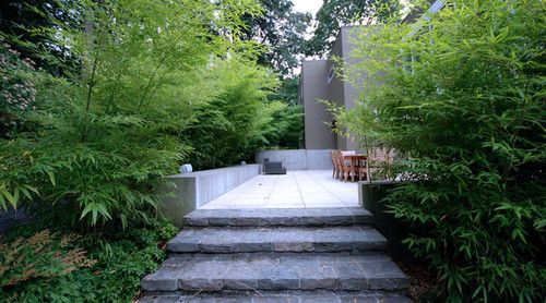 plant lined natural stone steps up to modern concrete patio