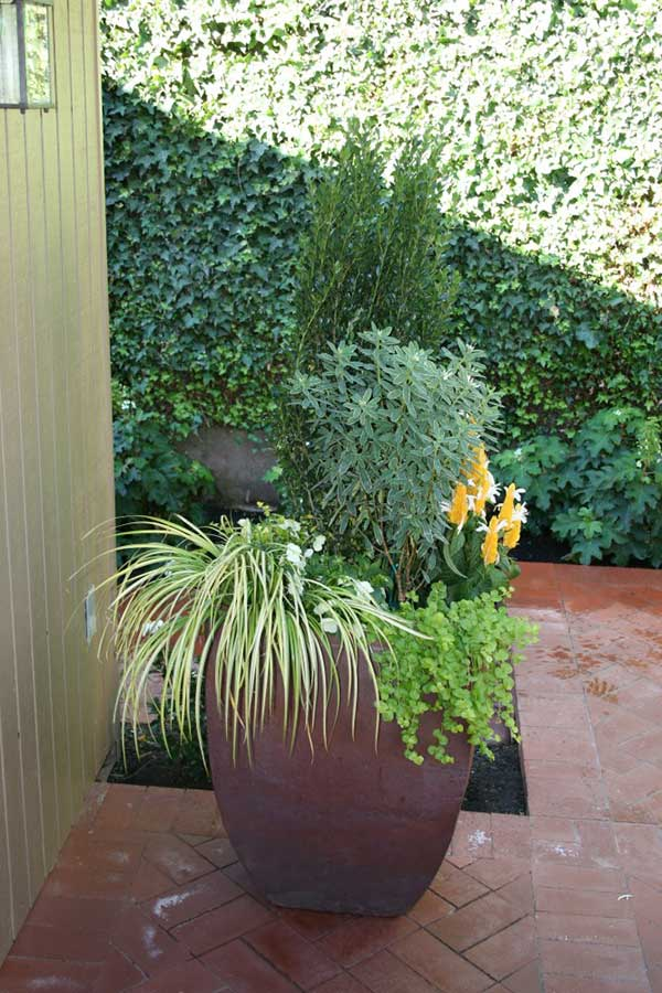 large squarish flower pot with variety of shrubs and flowers