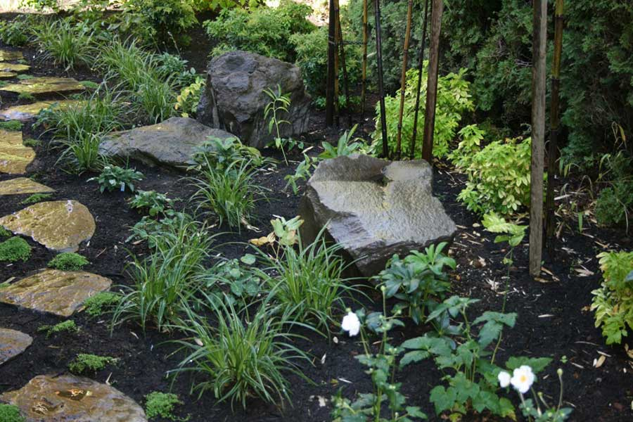 plant bed with grasses flowers stones and moss
