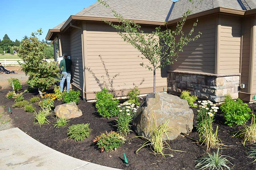 plant bed against house with variety of native plants sapling and large boulder